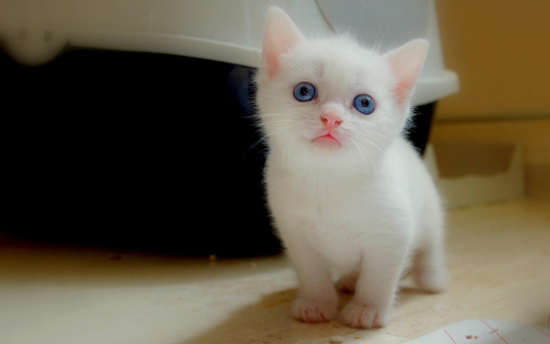 Rüyada Kedi Görmek İslami Tabiri