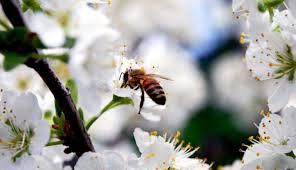 rüyada arı sokması görmek